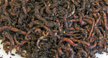 Worm Bedding